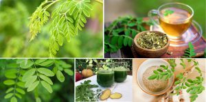 Miracle Moringa - krople - apteka - producent